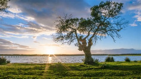 green tree near river in sunny day free image | Peakpx