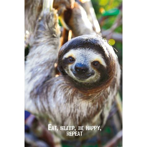 Smile Poster - Sloth, on Close Up
