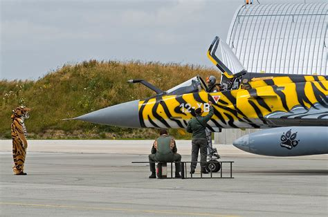French Nose & Tail art